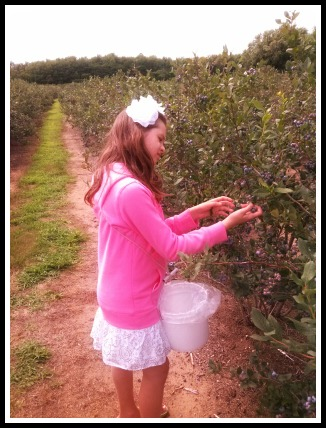 ash blueberry picking mich