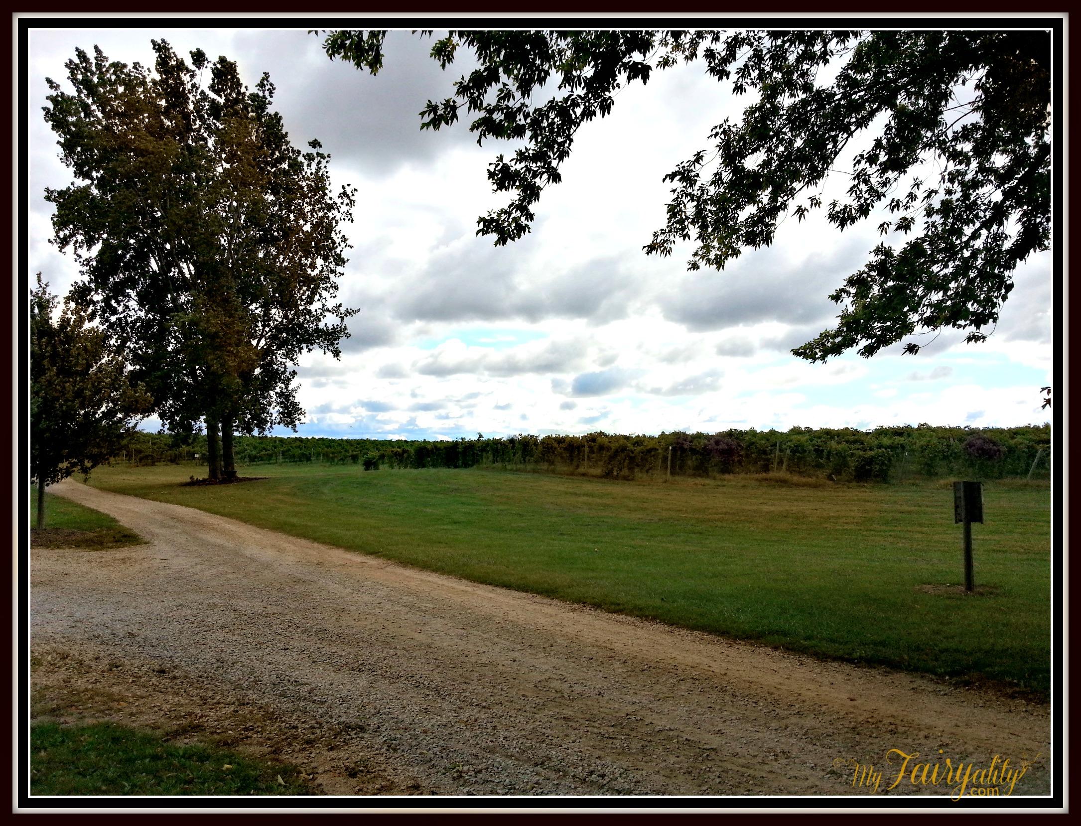 vinyeard view